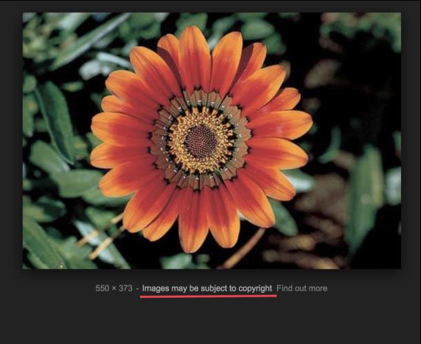 copyright-google-images